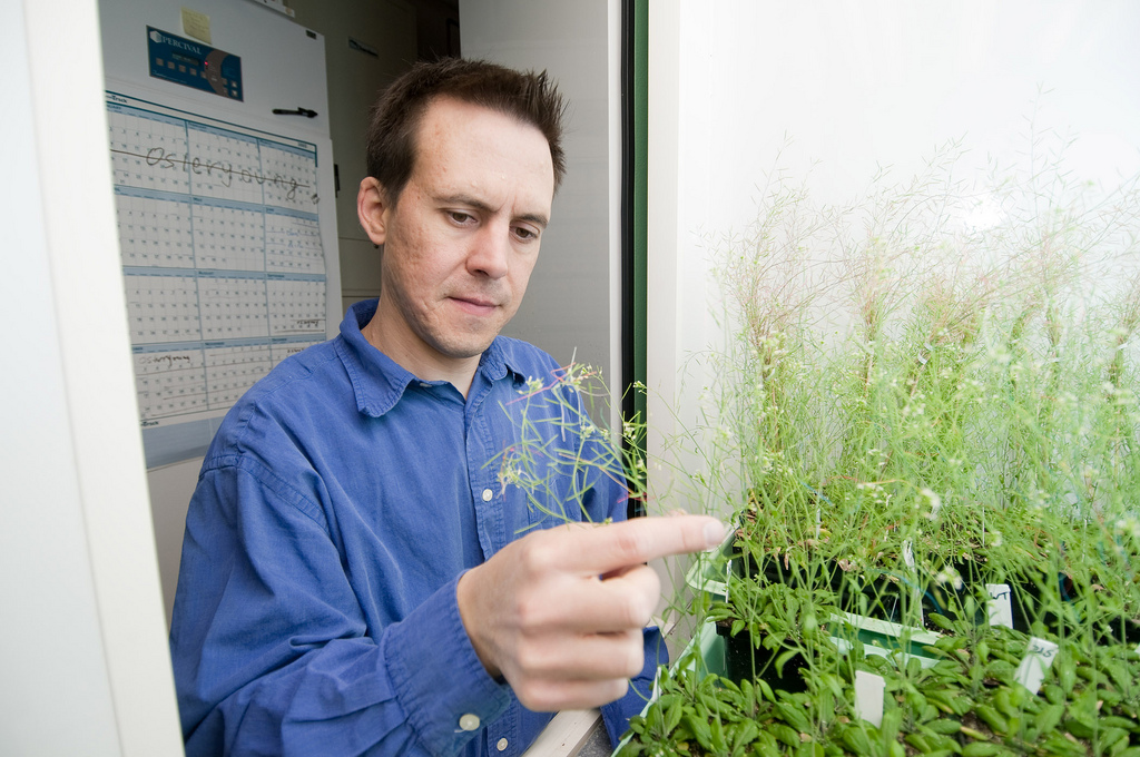 imothy Durrett, MSU plant biology research associate / Foto: Great Lakes Bioenergy Research Center / flickr.com
